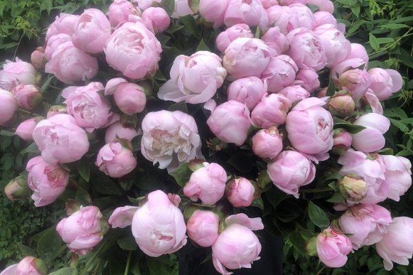 bloemen-10