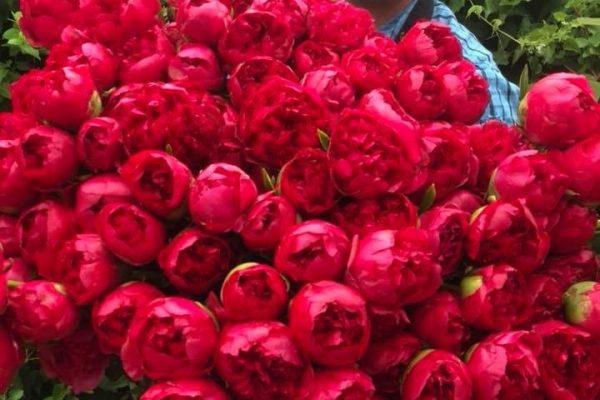 bloemen-11
